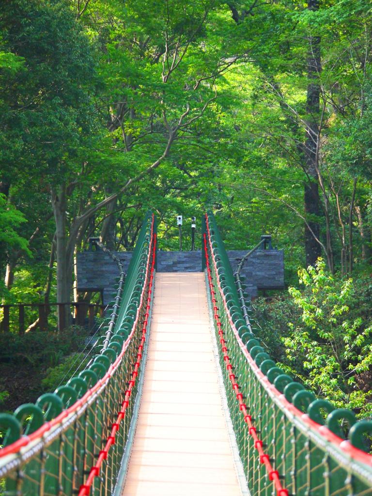 森林中的吊橋 | 奧萬大吊橋 | Aowanda Suspension Bridge | 奧萬大國家森林遊樂區 | レンアイ | ナントウ | 巡日旅行攝
