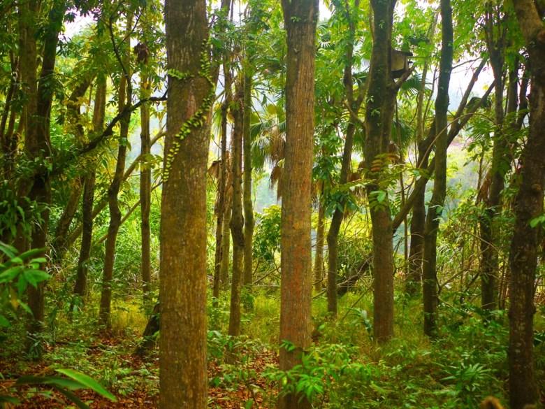 大自然森呼吸   青山綠樹   原始自然感   Takeyama   Zhushan   Nantou   巡日旅行攝