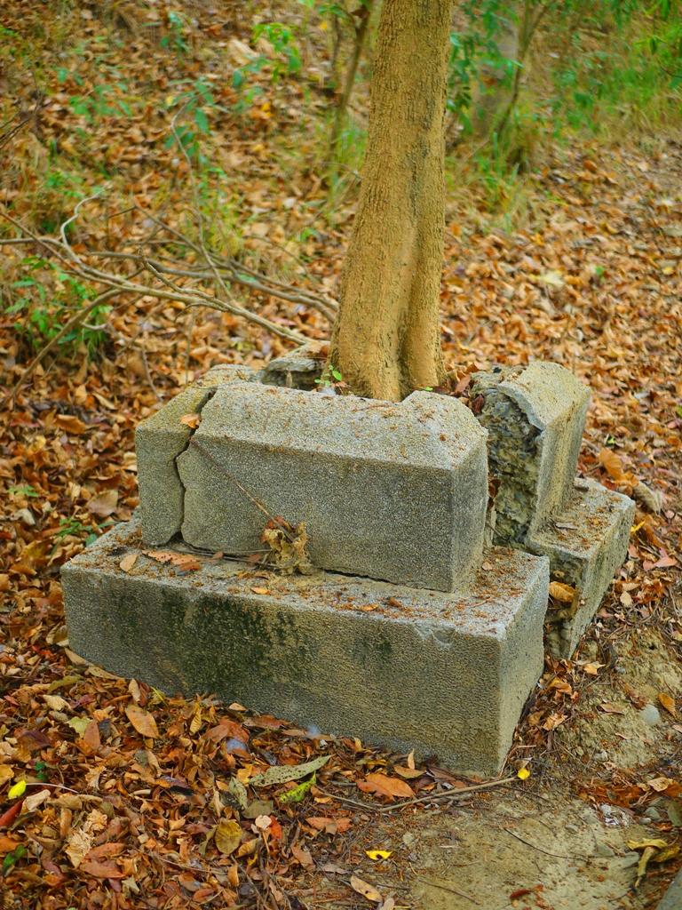 原神社參道上的石燈籠基座遺跡 | 現為芬多精步道 | 虎頭埤風景區內 | Xinhua | Tainan | RoundtripJp