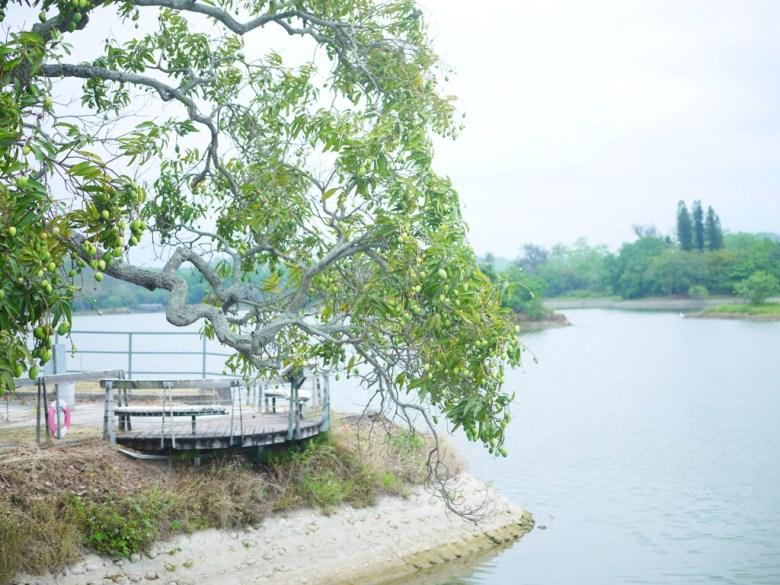 芒果樹 | 虎月吊橋入口旁 | 虎頭埤風景區內 | 新化 | 台南 | RoundtripJp