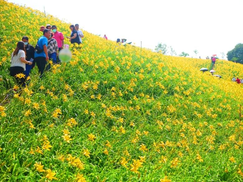 種植在山坡上綿延不絕的金針花海   浪漫絕美   Huatan   Changhua   Wafu Taiwan   RoundtripJp