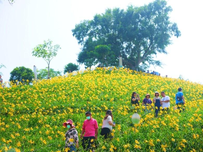 浪漫金針花海   浪漫黃金花海   台灣旅人   Huatan   Changhua   Wafu Taiwan   巡日旅行攝