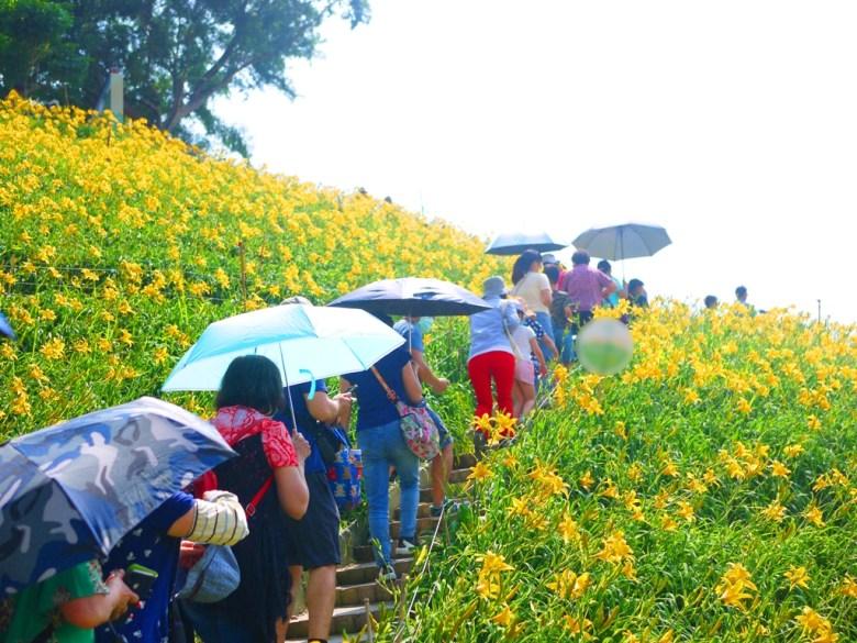 金針花賞花步道   人比花多   台灣旅人   Huatan   Changhua   RoundtripJp   巡日旅行攝