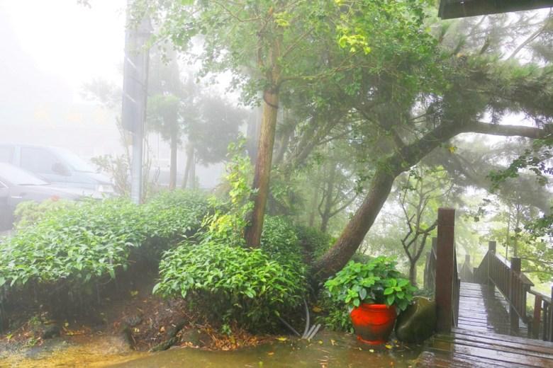 銀杏森林銀杏步道   雲霧飄渺   微雨   銀杏森林   ルーグー   Lugu   Nantou   Taiwan   和風臺灣   巡日旅行攝   RoundtripJp