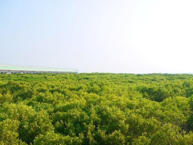 廣大而無邊無際的紅樹林   像極了動畫場景般的絕美樹海   台61線旁   ファンユエン   ほうえん   ジャンホワ   しょうか   Wafu Taiwan   巡日旅行攝   RoundtripJp