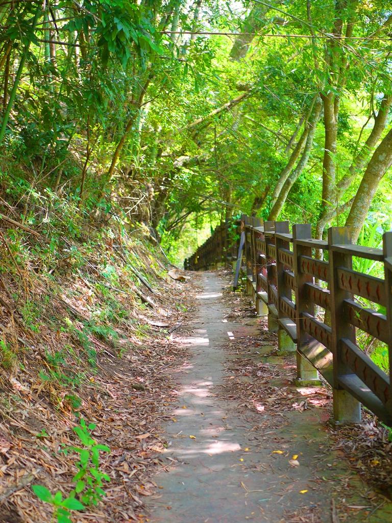 荒涼古老的步道 | 非常原始 | 秘境步道 | 部落步道 タイアン | たいあん | ミアオリー | Wafu Taiwan | 巡日旅行攝 | RoundtripJp