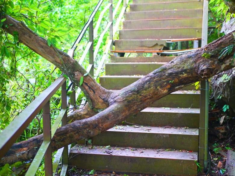 吊橋的彼端 | 無法通行 | 殘破不堪的樓梯 | 巨木擋道 | タイアン | たいあん | ミアオリー | Wafu Taiwan | 巡日旅行攝 | RoundtripJp
