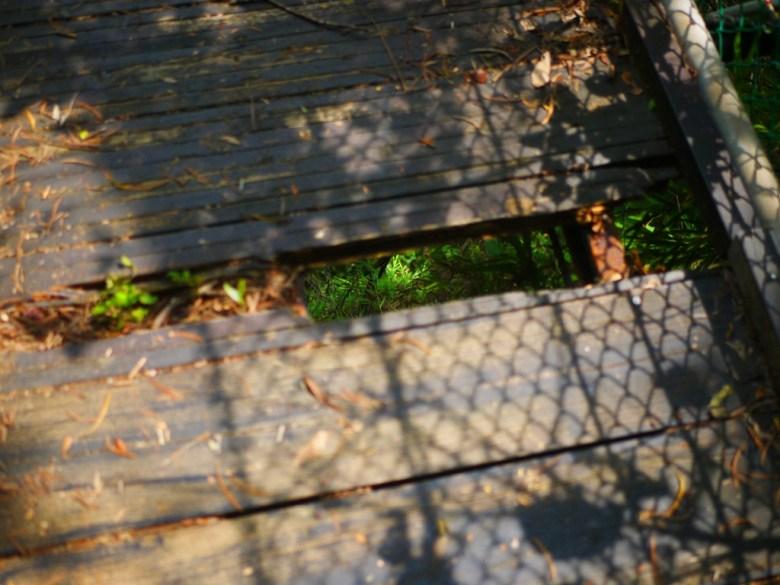 十足危險的吊橋 | 破洞的一角 | 象鼻吊橋 | タイアン | たいあん | ミアオリー | Wafu Taiwan | 巡日旅行攝 | RoundtripJp