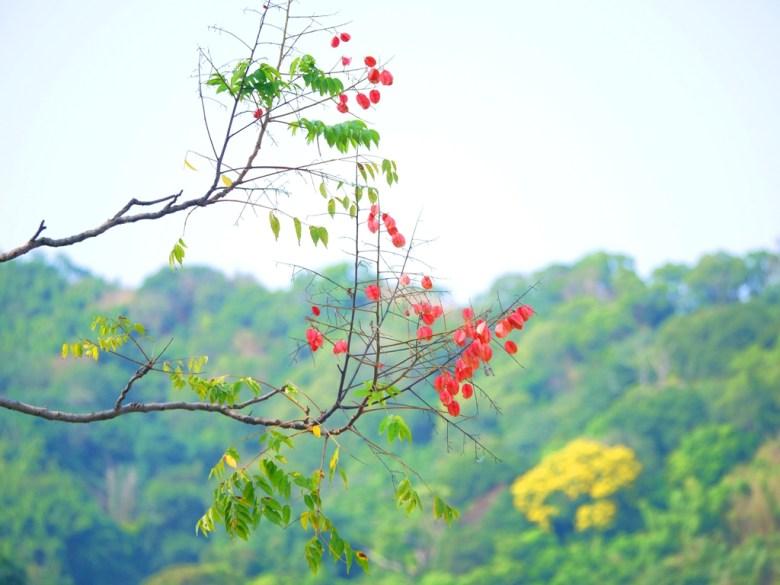 自然的環境   美麗的花朵   青色的山林   石岡水壩   シーガン   タイジョン   Shigang   Taichung   Wafu Taiwan   巡日旅行攝   RoundtripJp