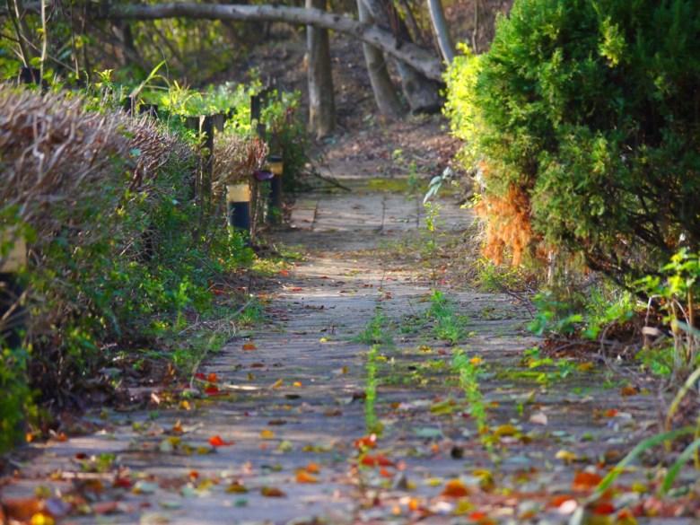 苗栗稻荷神社遺跡好漢坡中間的的健行步道   綠意盎然   古樸   Miaoli Inari Shrine Ruins   びょうりつし   ミアオリー   Wafu Taiwan   巡日旅行攝   RoundtripJp