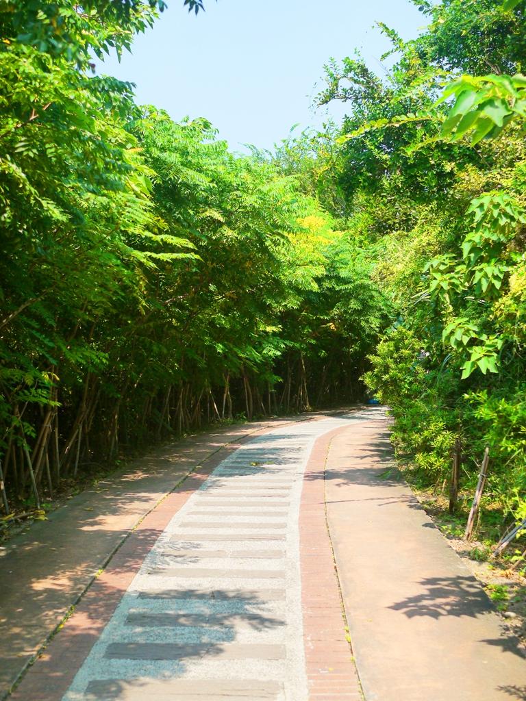 通往1號舊隧道前林蔭步道   微風徐徐   自然清新 Houlong   Miaoli   和風巡禮   巡日旅行攝   RoundtripJp