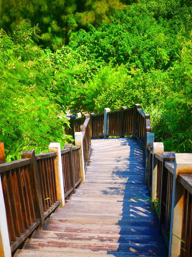 往下回到林蔭步道   林蔭步道中間   ホウロン   こうりゅう   ミアオリー   Wafu Taiwan   巡日旅行攝   RoundtripJp