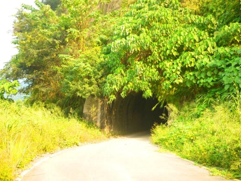 黑暗隧道 | 長青隧道出口 | 單向隧道 | 被草木覆蓋的森林隧道 | 草屯 | 南投 | Caotun | Nantou | Wafu Taiwan | 巡日旅行攝 | RoundtripJp