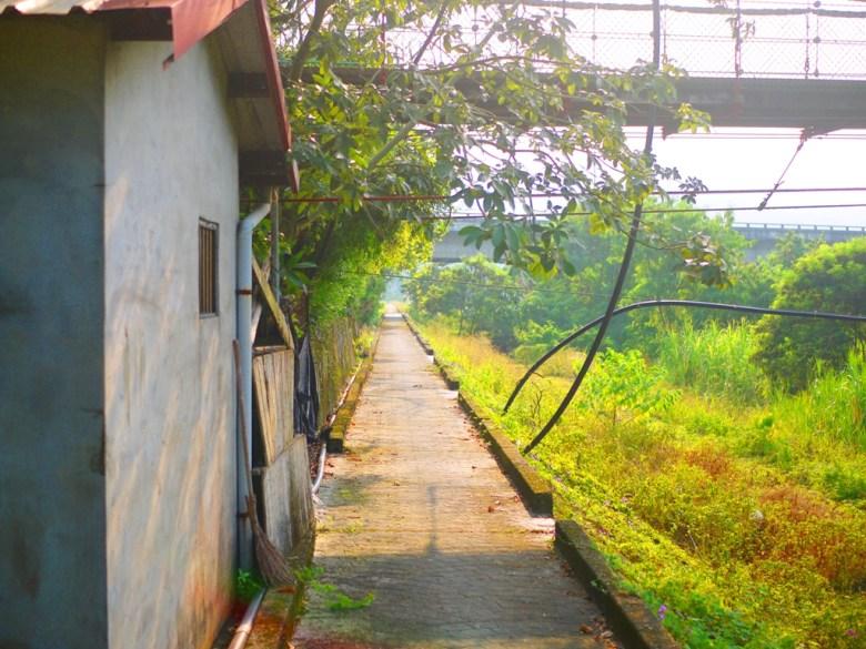 吊橋下的田野小徑 | 自然鄉村 | 散步健行 | 秘境旅行 | Caotun | Nantou | Wafu Taiwan | 巡日旅行攝 | RoundtripJp