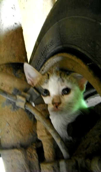 Kitty in the wheel