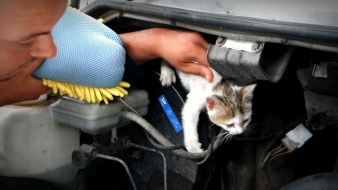 Kitty in the engine