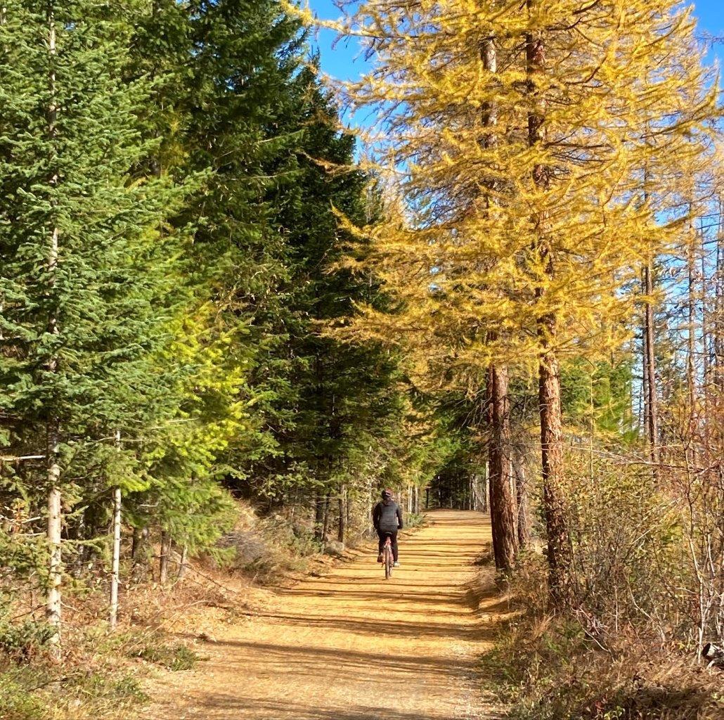 Woman biking through fall foliage