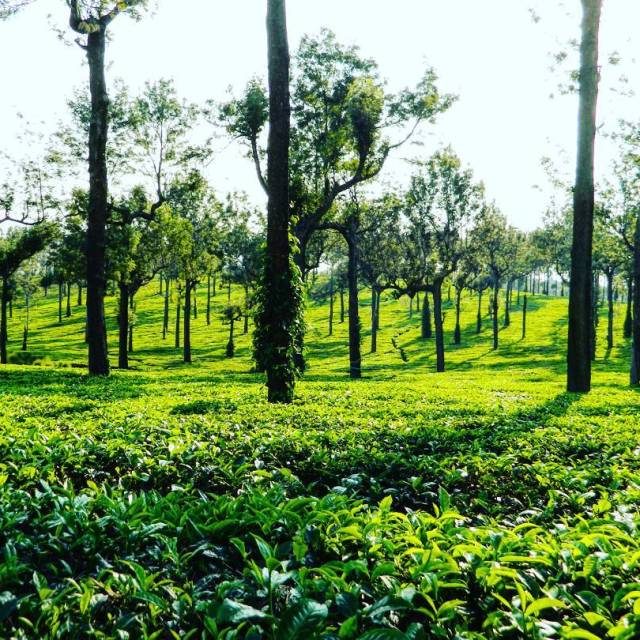 Sprawling tea plantations picturesque towns and winding lanes makes thishellip