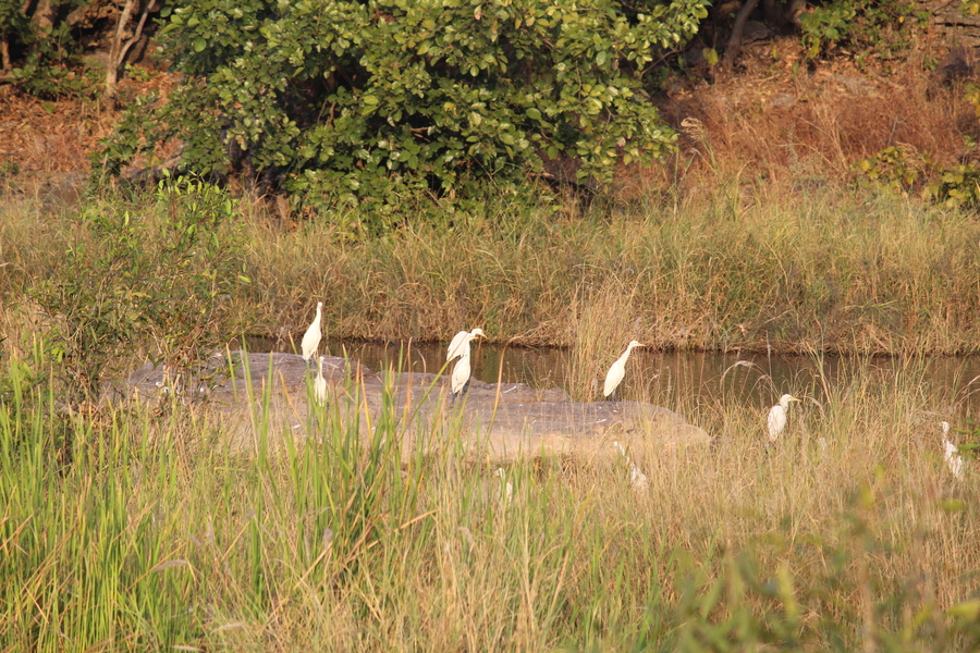 Khijadiya Bird Sanctuary