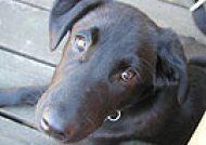 The Roving Vet: Dr. Shulamit Krakauer - Vancouver's mobile veterinarian