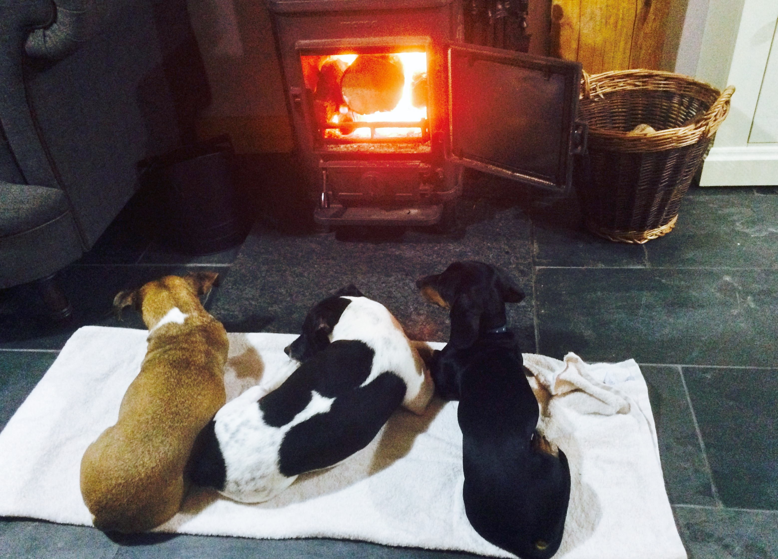Pet friendly infront of fire