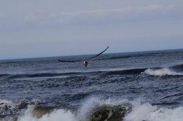 Avalon, NJ (4th of July 2014)