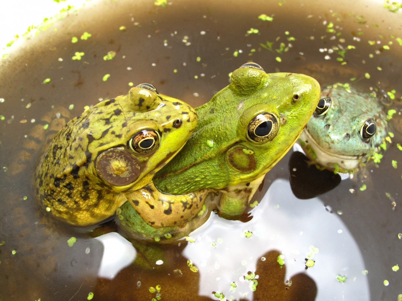 froggies! full