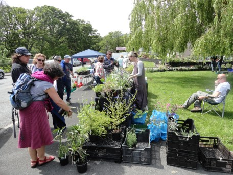 Donated plants stall