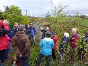 apple pruning workshop at a member's garden with Ian Sturrock