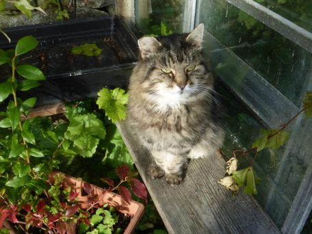 Sioned the cat relaxing in the greenhouse