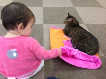 Eilinn aurait pu attraper le chat, mais non, elle s'est sagement assise à côté.