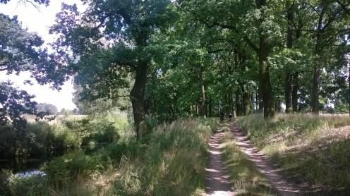 leśny dukt gdzieś pomiędzy Stawami Milickimi