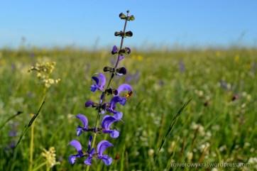 Flora Rezerwat Przęślin