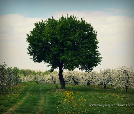 Polne dróżki wśród sadów