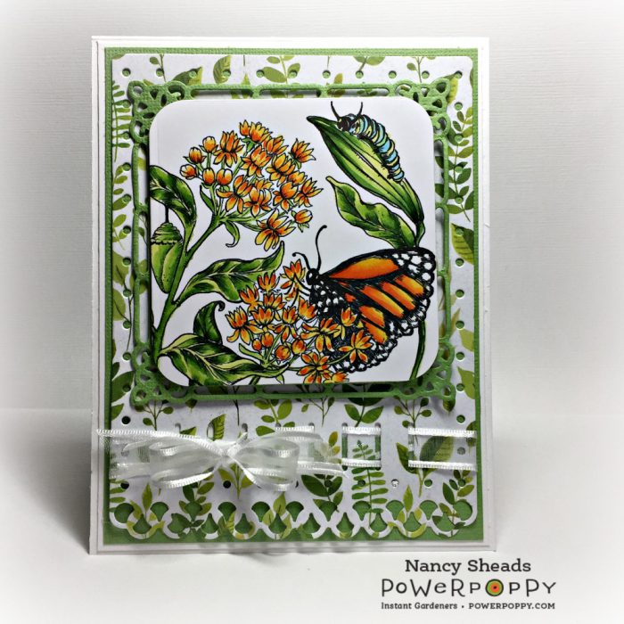Rowhouse Greetings | Monarchs and Milkweed by Power Poppy