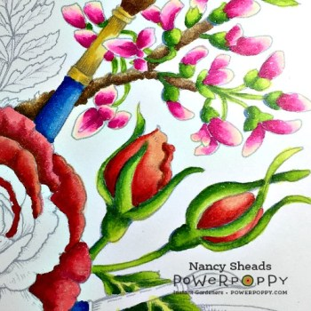 Rowhouse Greetings   Rose All Day by Power Poppy