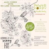 Trumpet Vine Visitor by Power Poppy
