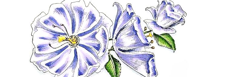 Rowhouse Greetings   Corner Blooms by My Favorite Things (MFT Stamps)