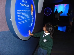 Reading about Sea animals