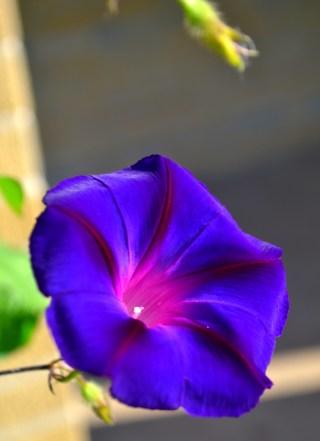 Carmel_PurpleFlowerEDIT