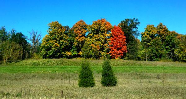 roundhilltriptrees
