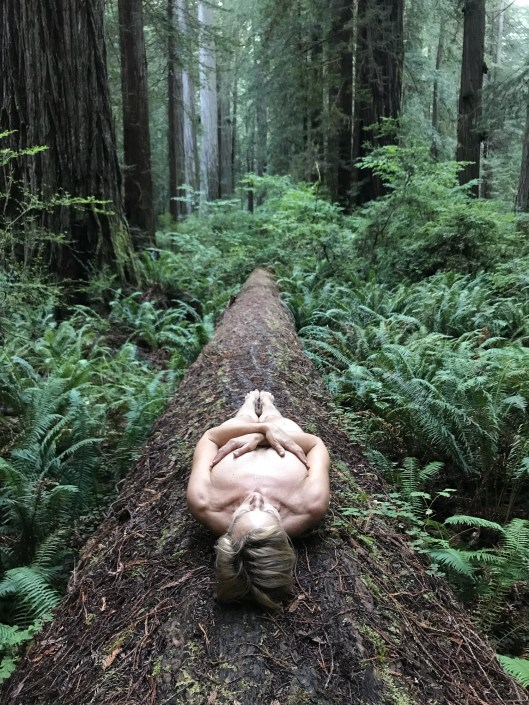 I AM: resting in the redwoods by Roxanne Darling
