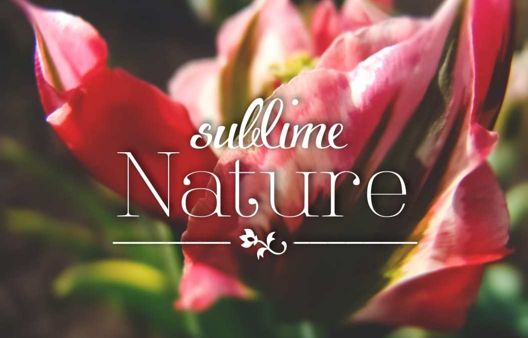 Sublime Nature