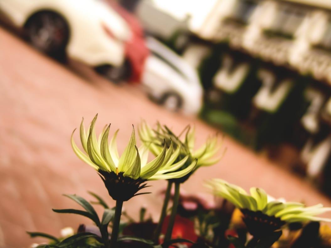 amgX amg roadshowX amg roadshow timisoara romaniaX blog masiniX bloggerX cars blogX fashion blog romaniaX lifestyleX mercedes amgX mercedes benzX roxi rose (31)