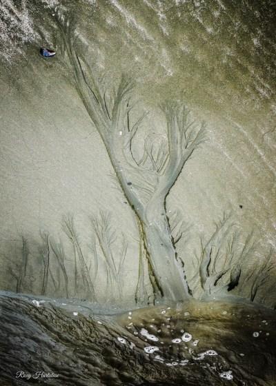 Under A Seashell Moon Canvas Print Photography by Roxy Hurtubise
