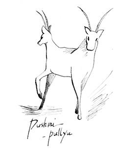 ドリトル先生, アフリカゆき, Doctor Dolittle, Pushmi-Pullyu, オシツオサレツ, 動物, animals, 頭が二つ