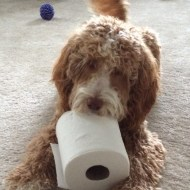 I found this cool doggie toy!