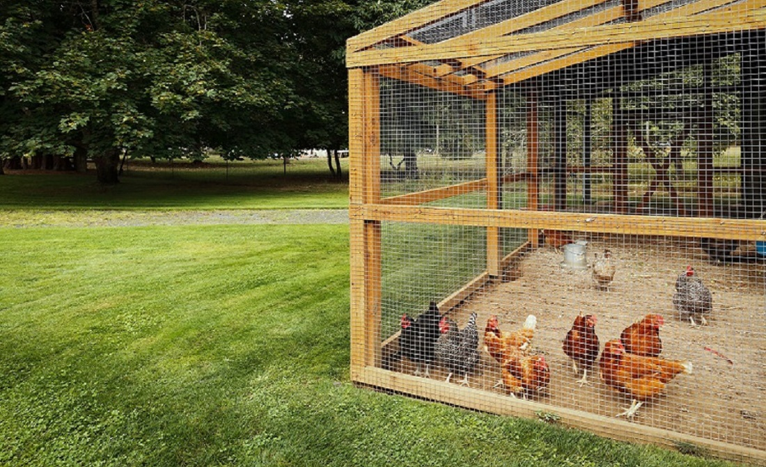 royal Chicken Coop