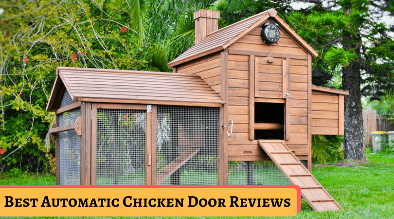 Best Automatic Chicken Door Reviews