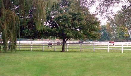 Turnout pasture